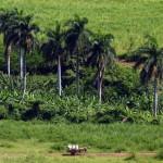 Cuba / Trinidad