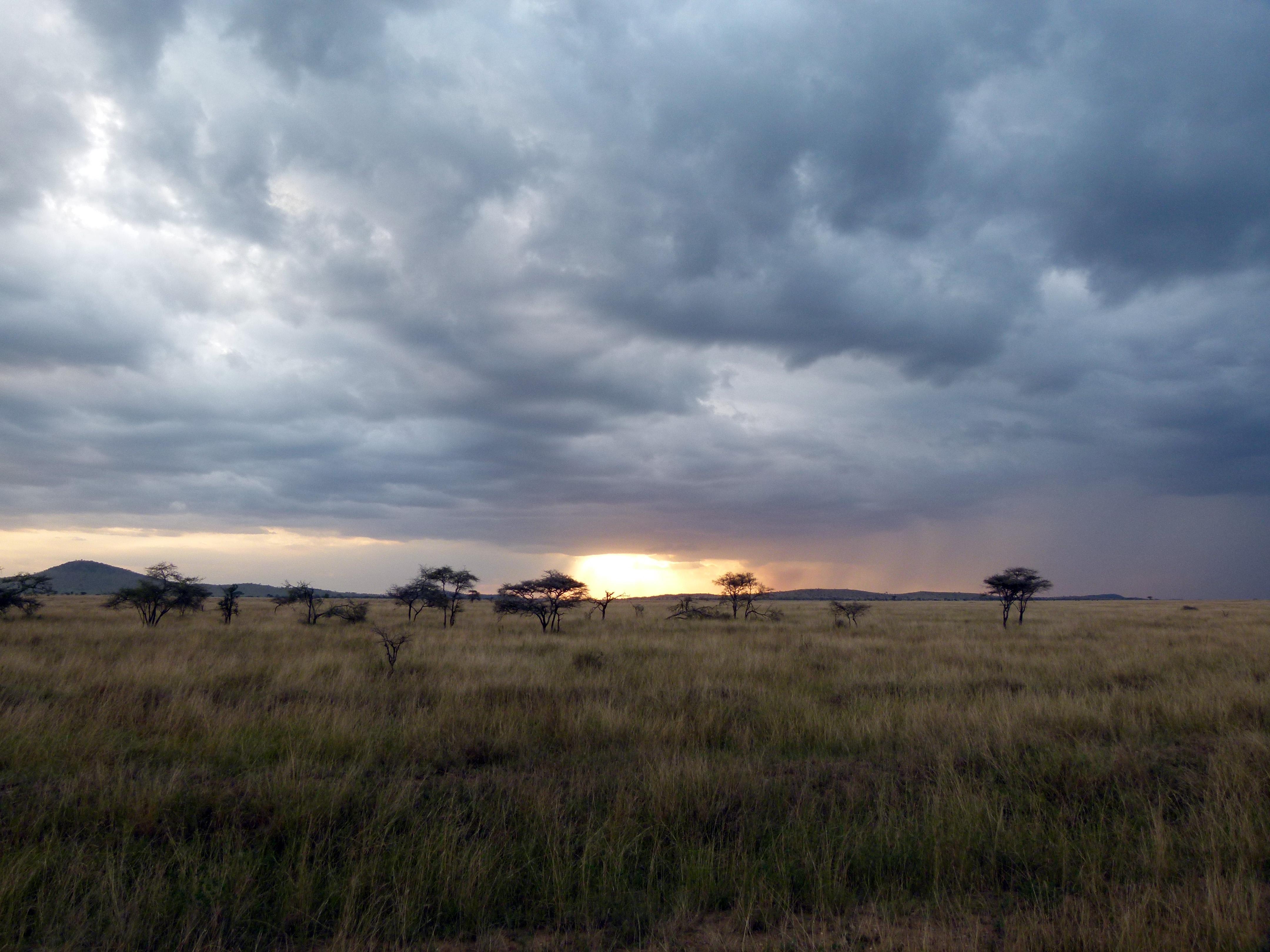 El Serengueti